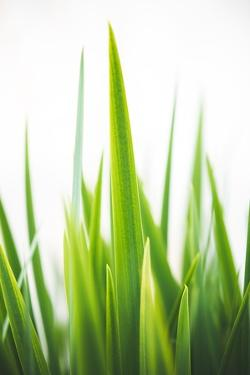 Blades of Green No. 1 by Sonja Quintero