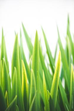 Blades of Green No. 2 by Sonja Quintero