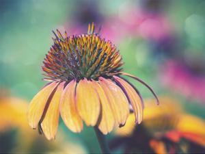 Mellow Yellows I by Sonja Quintero