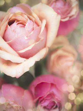 Rosie Pink II by Sonja Quintero