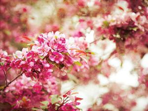 Spring Blooms by Sonja Quintero