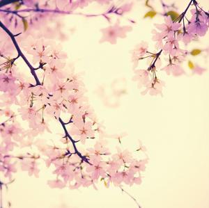 Spring Springs by Sonja Quintero