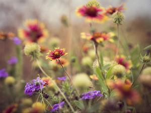 Wild Blooms I by Sonja Quintero