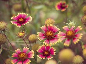 Wild Blooms II by Sonja Quintero