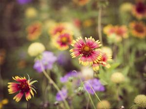 Wild Blooms III by Sonja Quintero