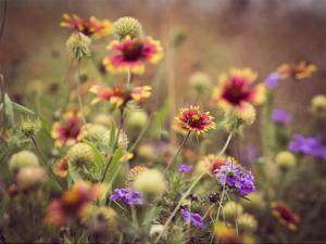 Wild Blooms IV by Sonja Quintero