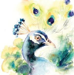 Peacock by Sophia Rodionov
