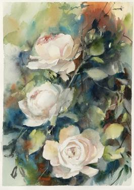 White Roses by Sophia Rodionov