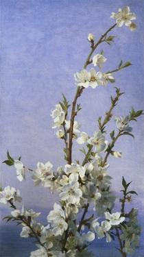 Blossom by Sophie Anderson