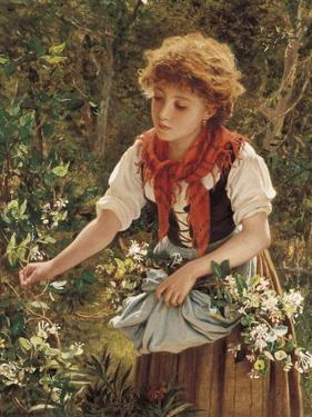 Picking Honeysuckle by Sophie Anderson