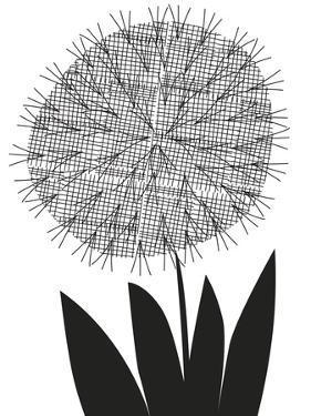 Graphic Allium by Sophie Ledesma