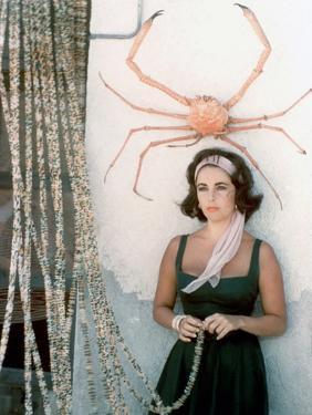 Soudain l'ete dernier SUDDENLY, LAST SUMMER, 1959 by JOSEPH L. MANKIEWICZ with Elizabeth Taylor (ph