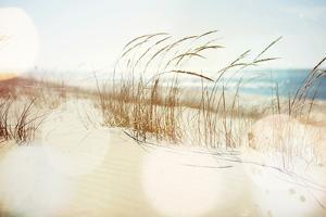 Dune Grasses on the Beach by soupstock