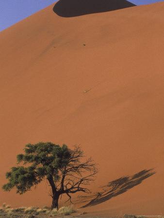 https://imgc.allpostersimages.com/img/posters/soussevlei-sand-dune-at-sunrise-namibia_u-L-P587CK0.jpg?p=0