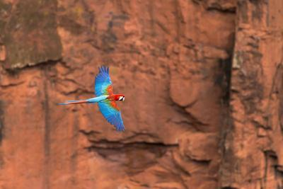 https://imgc.allpostersimages.com/img/posters/south-america-brazil-mato-grosso-do-sul-jardim-red-and-green-macaws-flying-in-the-sinkhole_u-L-Q1CZMR70.jpg?p=0