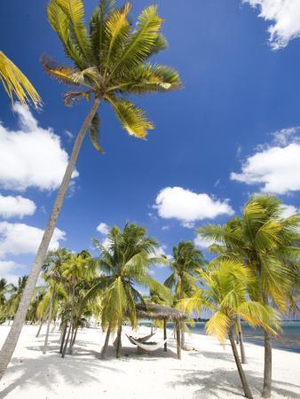 https://imgc.allpostersimages.com/img/posters/southern-cross-club-little-cayman-cayman-islands-caribbean_u-L-P246D70.jpg?p=0