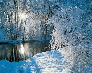Sparkiling Winter Scene