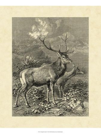 Vintage Roe Deer II