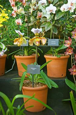 Specimens on Display at the Kew Orchid Festival, Kew Gardens, London