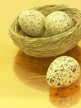 Speckled Eggs in a Little Bird's Nest