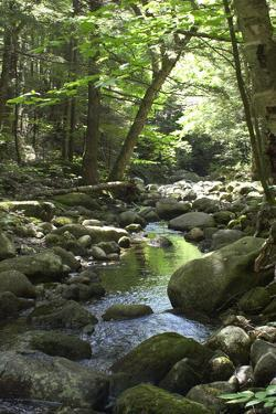 Speckled Mountain Wilderness Area Brook in the White Mountains of Evans Notch, Western Maine