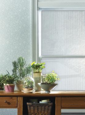 Spectrum Window Privacy Film