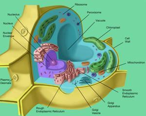 Plant Cell by Spencer Sutton