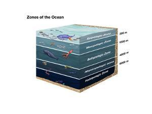 Zones of the Ocean by Spencer Sutton