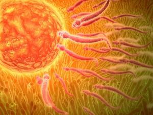 Sperm Traveling Towards Egg with Cellia