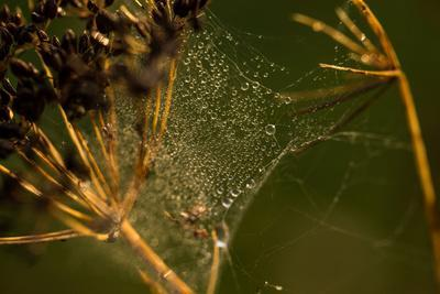 https://imgc.allpostersimages.com/img/posters/spider-web-with-dew-droplets-between-dry-plants-nature-dark-background_u-L-Q1EXWIG0.jpg?artPerspective=n