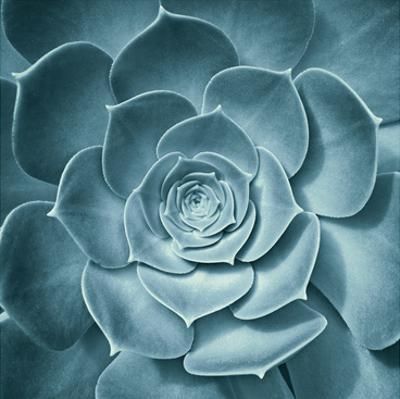 Symmetrical Flora by Spiler