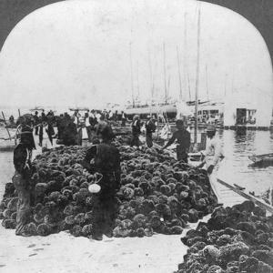 Sponge Market, Key West Harbour, Florida, USA, C1900