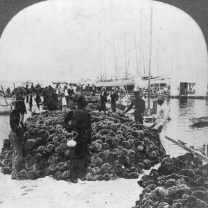 Sponge Market, Key West Harbour, Florida, USA, C1900
