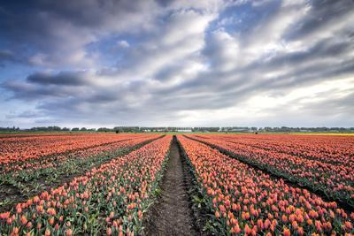 https://imgc.allpostersimages.com/img/posters/spring-clouds-over-fields-of-multi-coloured-tulips-netherlands_u-L-Q12SD3H0.jpg?p=0