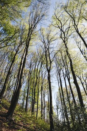https://imgc.allpostersimages.com/img/posters/spring-heaven-in-the-teutoburg-forest_u-L-Q1EXMUU0.jpg?artPerspective=n