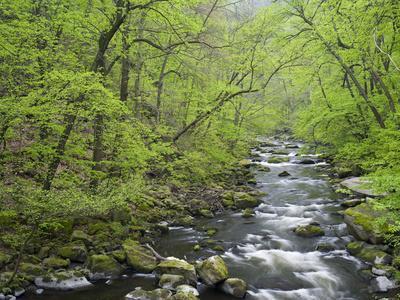 https://imgc.allpostersimages.com/img/posters/spring-in-the-bodetal-bode-harz-national-park-saxony-anhalt-germany_u-L-Q1EY0GL0.jpg?artPerspective=n