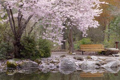 https://imgc.allpostersimages.com/img/posters/spring-scenic-in-lithia-park-ashland-oregon-usa_u-L-PN6OEH0.jpg?p=0