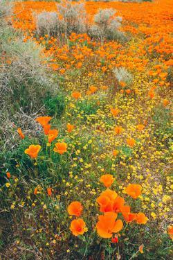 Spring Wildflower Design