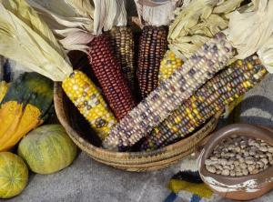 Squash, Corn, and Beans: the Three Sisters of Native American Agriculture