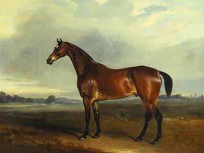 A Bay Hunter, the Property of the Hon F. Craven in a Landscape