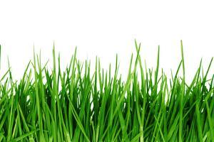 Green Grass Isolated by SSilver
