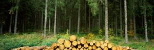 Stack of Firewood in a Forest, Northern Black Forest Region, Baden-Wurttemberg, Germany