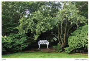Bench and Tree by Stacy Bass
