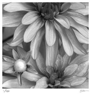 Botanical Study 10 by Stacy Bass