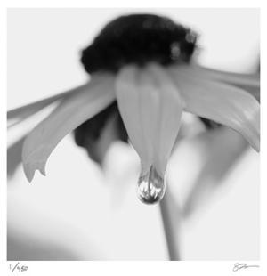 Botanical Study 11 by Stacy Bass