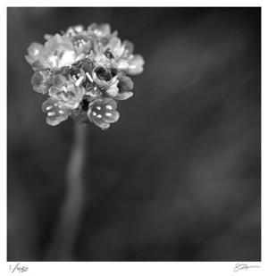Botanical Study 16 by Stacy Bass