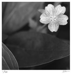 Botanical Study 17 by Stacy Bass