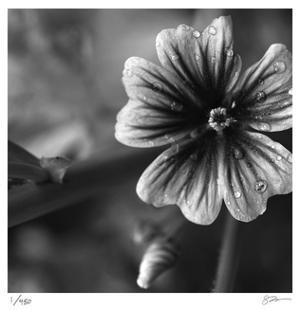 Botanical Study 19 by Stacy Bass