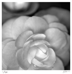 Botanical Study 20 by Stacy Bass