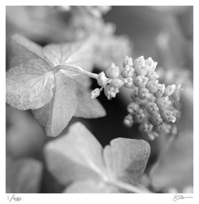 Image result for flowers all posters black and white